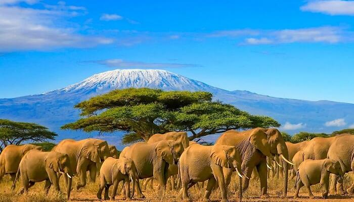 Wildly Relaxing: 5 Reasons You Need to Plan a Vacation to Africa