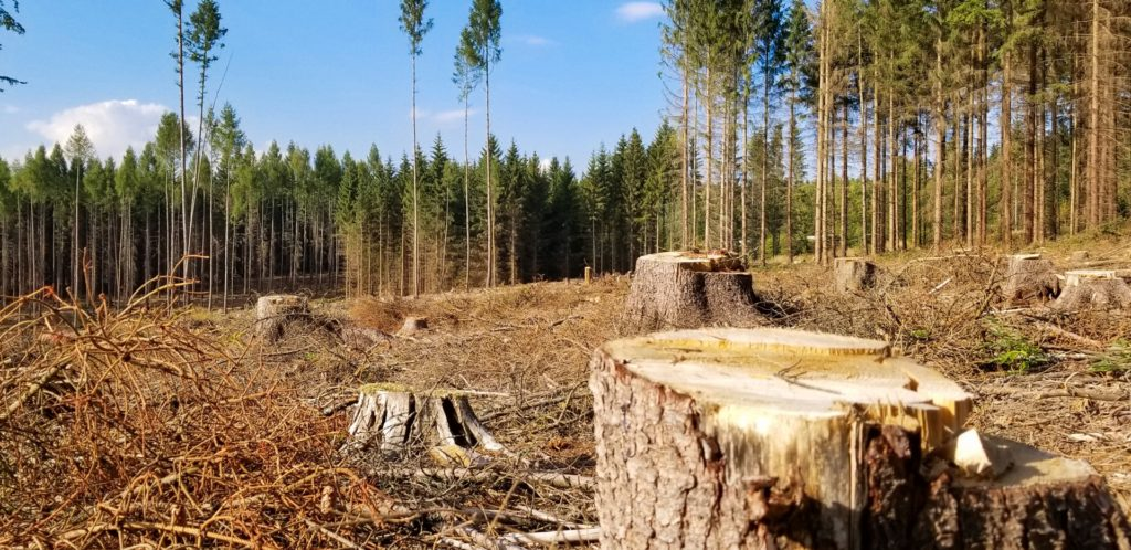 Cutting Down Trees: When and How to Do it